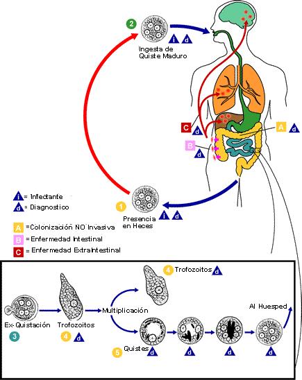 diagnóstico de infección parasitaria