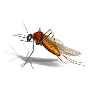 Lista de enfermedades transmitidas por vectores